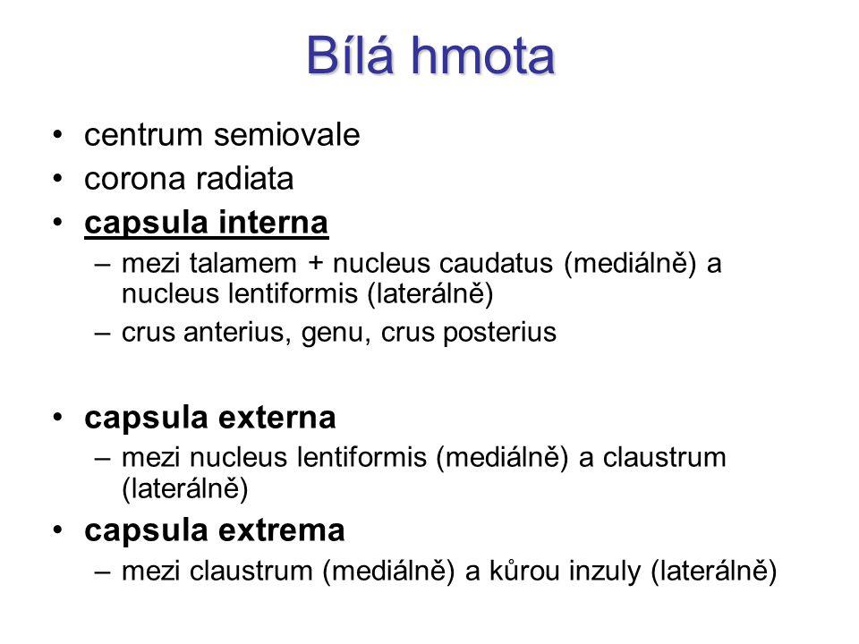 Bílá hmota centrum semiovale corona radiata capsula interna –mezi talamem + nucleus caudatus (mediálně) a nucleus lentiformis (laterálně) –crus anteri