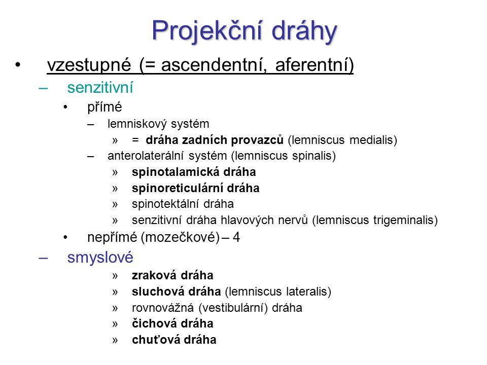 Projekční dráhy vzestupné (= ascendentní, aferentní) –senzitivní přímé –lemniskový systém »= dráha zadních provazců (lemniscus medialis) –anterolaterá