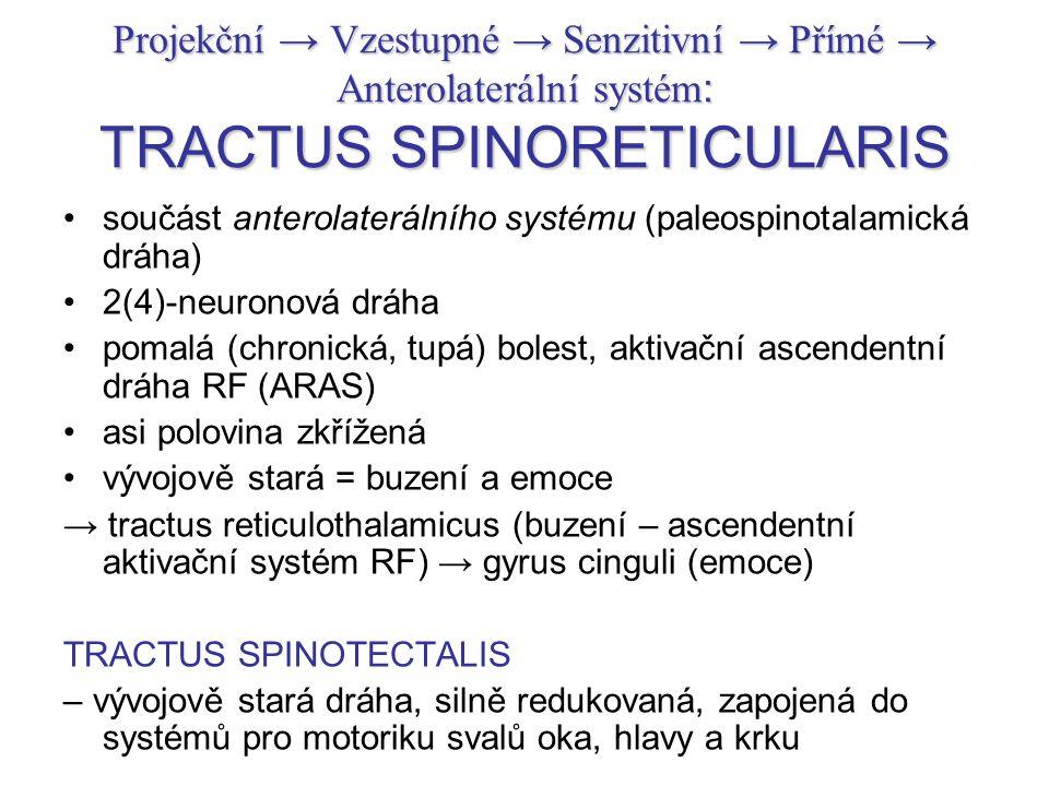 Projekční → Vzestupné → Senzitivní → Přímé → Anterolaterální systém : TRACTUS SPINORETICULARIS součást anterolaterálního systému (paleospinotalamická