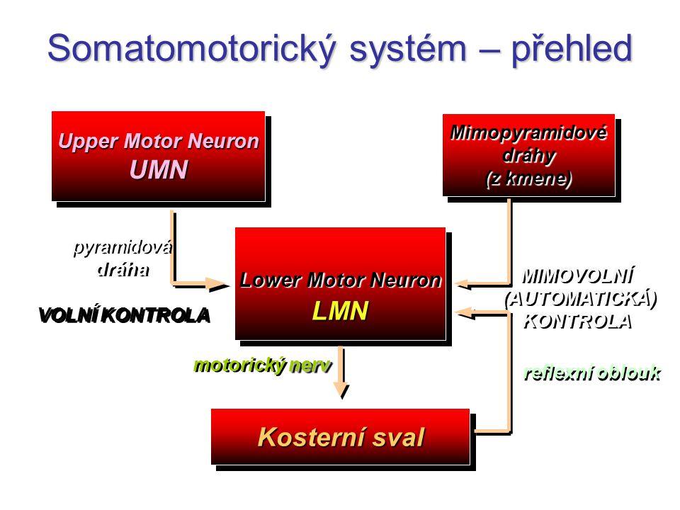 Upper Motor Neuron UMN UMN Lower Motor Neuron LMN LMN Kosterní sval Mimopyramidovédráhy (z kmene) Mimopyramidovédráhy nerv motorický nerv pyramidová d