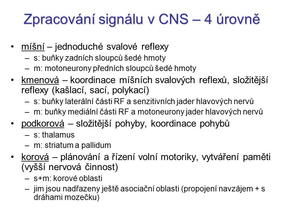 Zpracování signálu v CNS – 4 úrovně míšní – jednoduché svalové reflexy –s: buňky zadních sloupců šedé hmoty –m: motoneurony předních sloupců šedé hmot