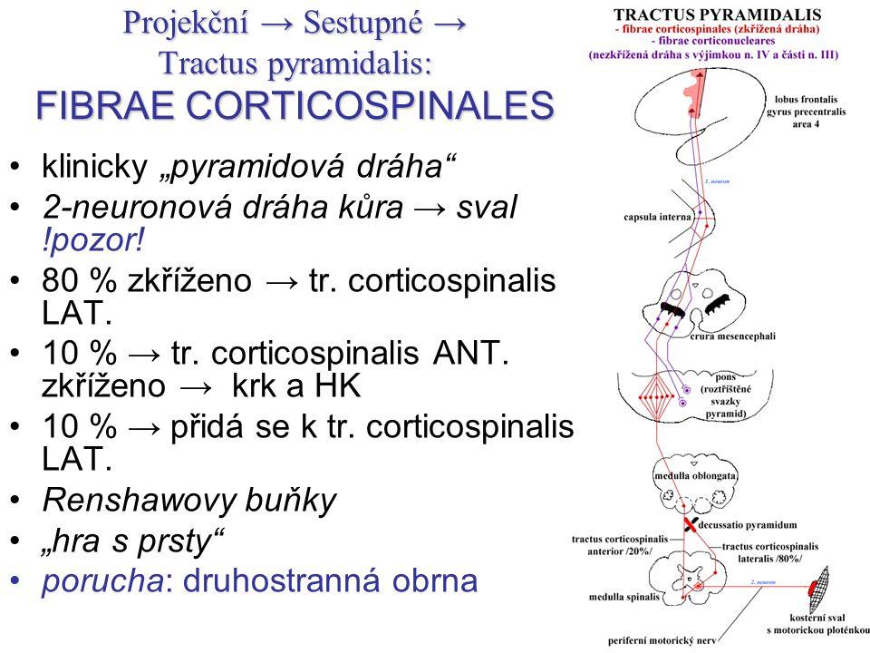 "Projekční → Sestupné → Tractus pyramidalis: FIBRAE CORTICOSPINALES klinicky ""pyramidová dráha"" 2-neuronová dráha kůra → sval !pozor! 80 % zkříženo → t"