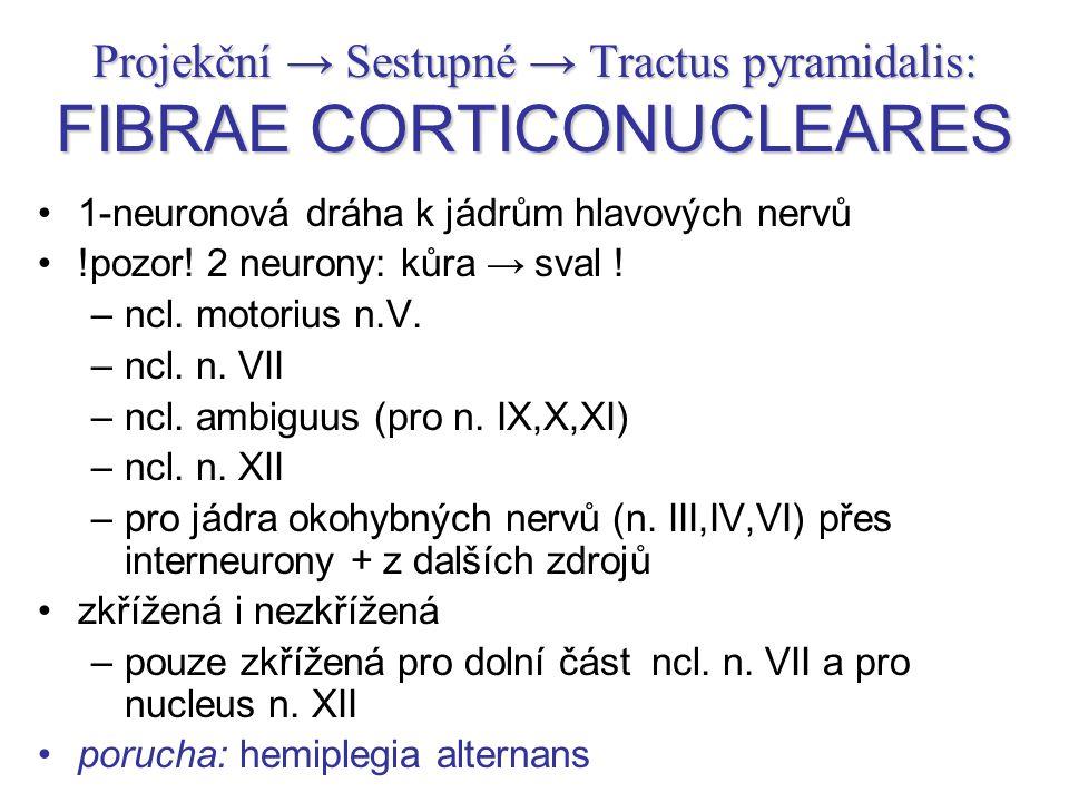 Projekční → Sestupné → Tractus pyramidalis: FIBRAE CORTICONUCLEARES 1-neuronová dráha k jádrům hlavových nervů !pozor! 2 neurony: kůra → sval ! –ncl.