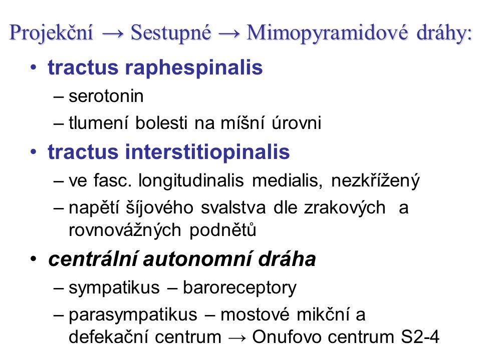 Projekční → Sestupné → Mimopyramidové dráhy: tractus raphespinalis –serotonin –tlumení bolesti na míšní úrovni tractus interstitiopinalis –ve fasc. lo