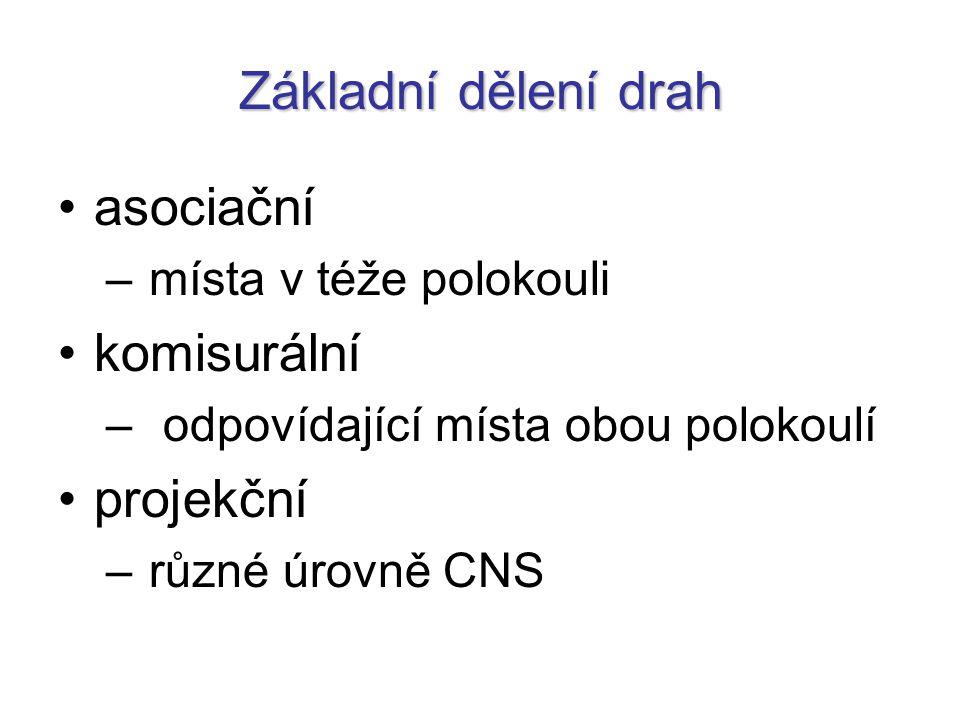 Základní dělení drah asociační – místa v téže polokouli komisurální – odpovídající místa obou polokoulí projekční – různé úrovně CNS