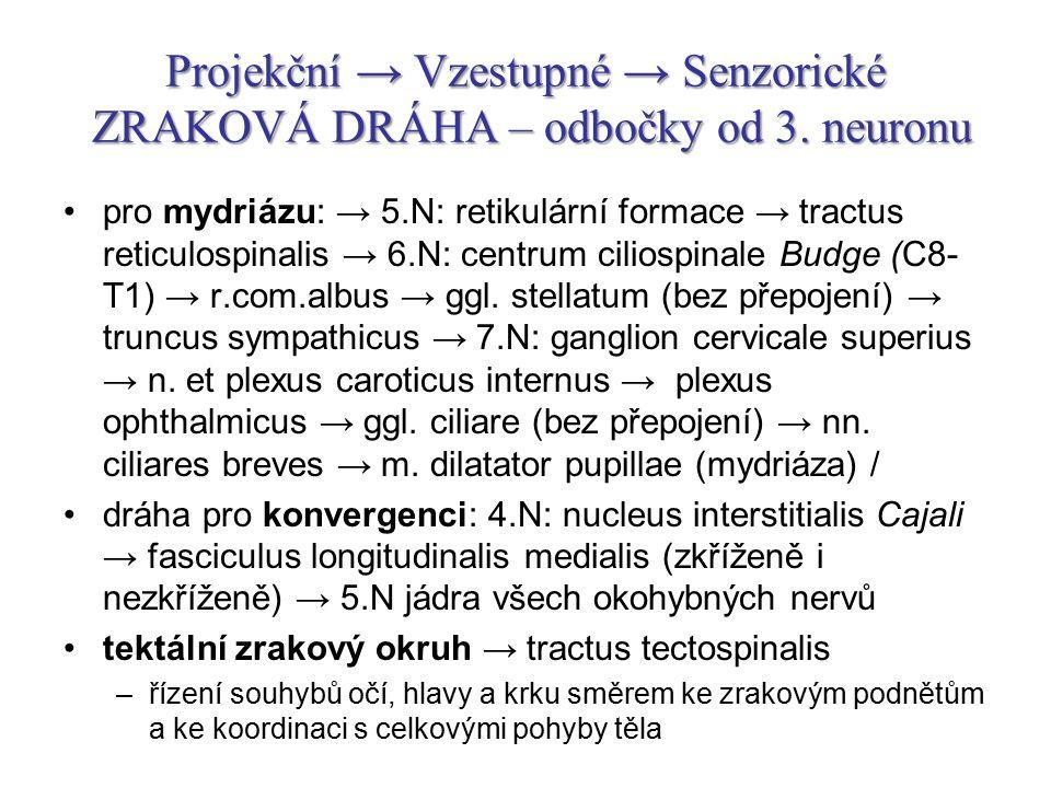 Projekční → Vzestupné → Senzorické ZRAKOVÁ DRÁHA – odbočky od 3. neuronu pro mydriázu: → 5.N: retikulární formace → tractus reticulospinalis → 6.N: ce