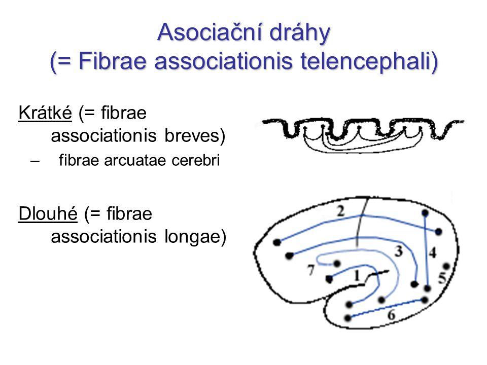 Dlouhé asociační dráhy fasciculus occipitofrontalis sup.