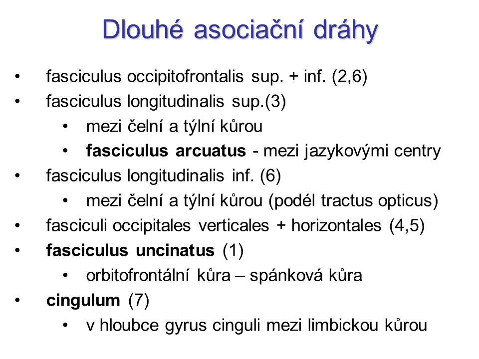 Dlouhé asociační dráhy fasciculus occipitofrontalis sup. + inf. (2,6) fasciculus longitudinalis sup.(3) mezi čelní a týlní kůrou fasciculus arcuatus -