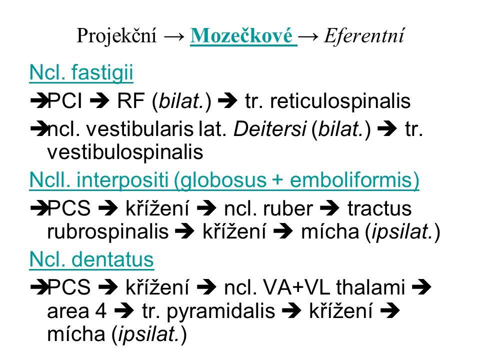 Projekční → Mozečkové → Eferentní Ncl. fastigii  PCI  RF (bilat.)  tr. reticulospinalis  ncl. vestibularis lat. Deitersi (bilat.)  tr. vestibulos