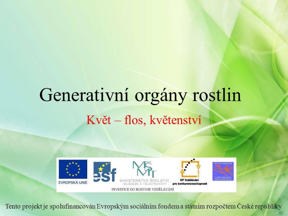Generativní orgány rostlin Květ – flos, květenství Tento projekt je spolufinancován Evropským sociálním fondem a státním rozpočtem České republiky