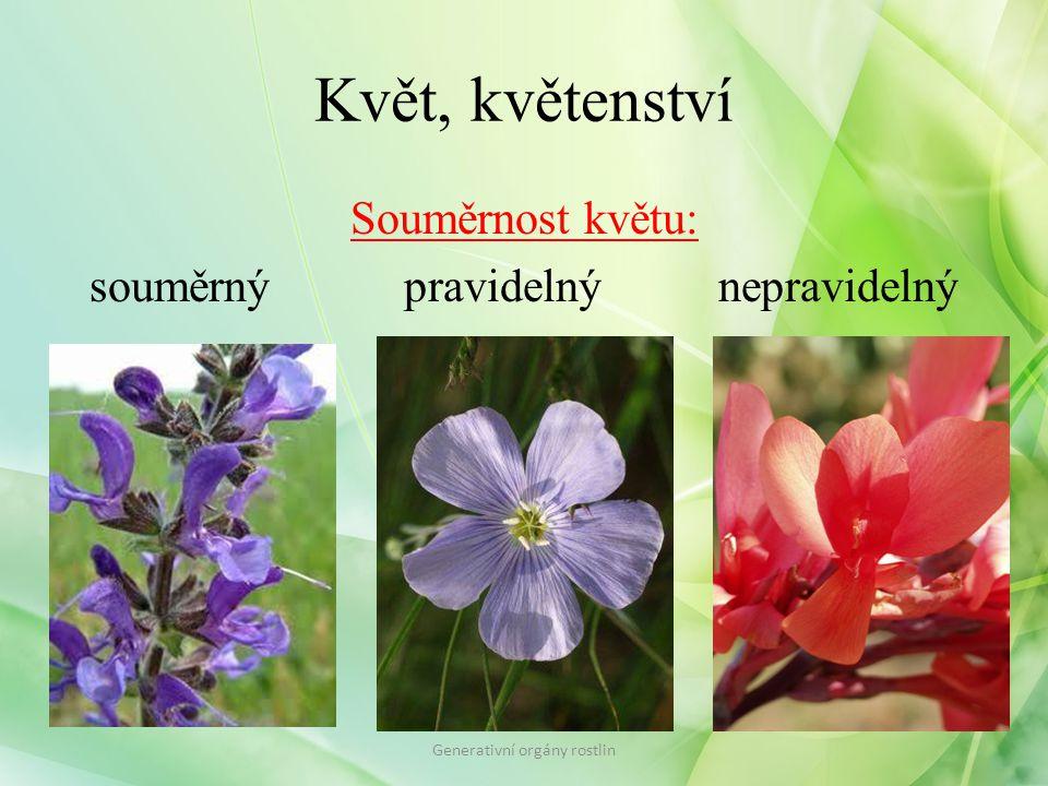 Květ, květenství Souměrnost květu: souměrný pravidelnýnepravidelný Generativní orgány rostlin