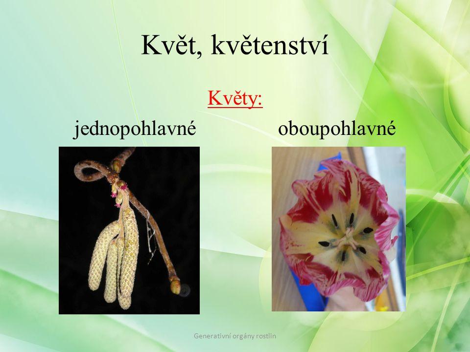Květ, květenství Květy: jednopohlavné oboupohlavné Generativní orgány rostlin