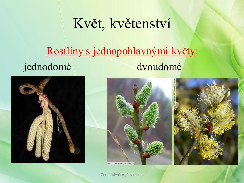 Květ, květenství Rostliny s jednopohlavnými květy: jednodomédvoudomé Generativní orgány rostlin