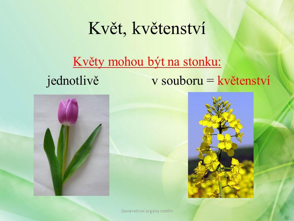 Květ, květenství Květy mohou být na stonku: jednotlivě v souboru = květenství Generativní orgány rostlin