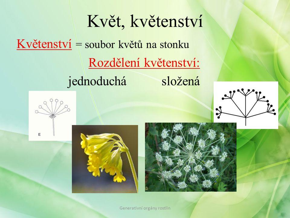 Květ, květenství Květenství = soubor květů na stonku Rozdělení květenství: jednoduchásložená Generativní orgány rostlin
