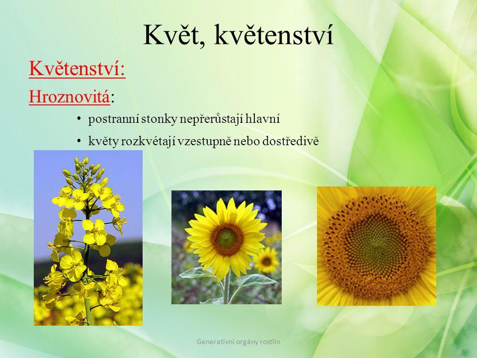 Květ, květenství Květenství: Hroznovitá: postranní stonky nepřerůstají hlavní květy rozkvétají vzestupně nebo dostředivě Generativní orgány rostlin