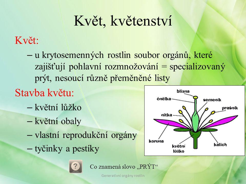 Květ, květenství Květní stopka: – připojuje květ ke stonku Květní lůžko: – stonkového původu Květní obaly: – okvětí nebo kalich a koruna Generativní orgány rostlin