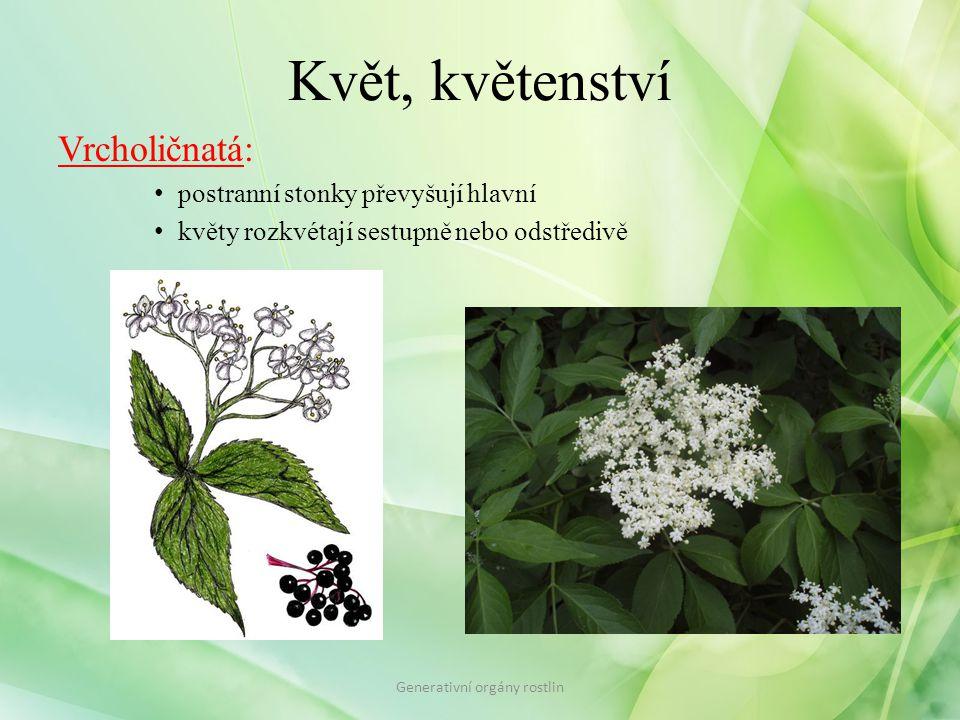 Květ, květenství Vrcholičnatá: postranní stonky převyšují hlavní květy rozkvétají sestupně nebo odstředivě Generativní orgány rostlin