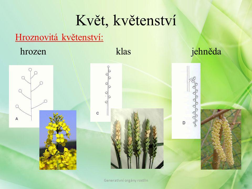 Květ, květenství Hroznovitá květenství: hrozenklasjehněda Generativní orgány rostlin