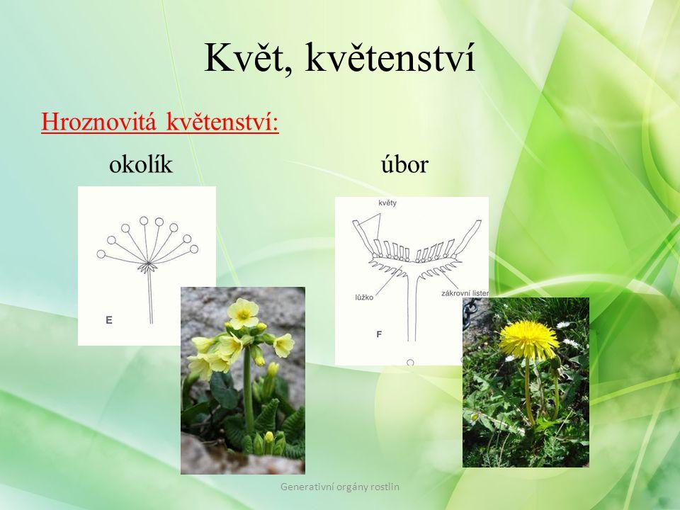 Květ, květenství Hroznovitá květenství: okolíkúbor Generativní orgány rostlin