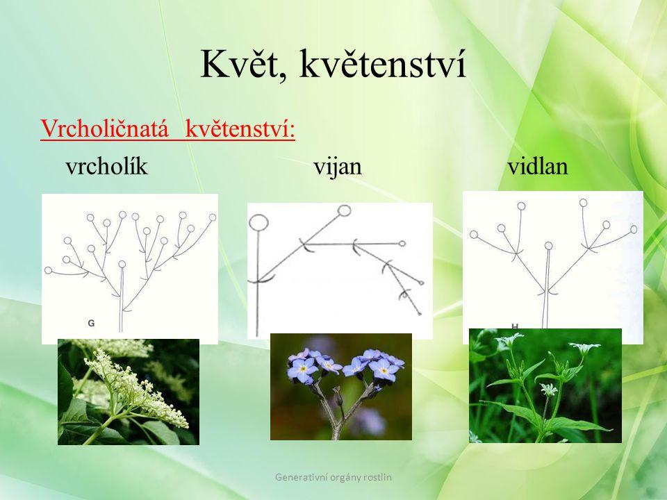 Květ, květenství Vrcholičnatá květenství: vrcholík vijan vidlan Generativní orgány rostlin