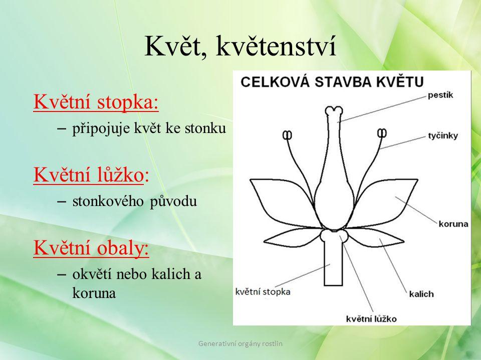 Květ, květenství nerozlišené lístky okvětí – perigon P rozlišené lístky kalich – kalix K koruna – corolla C Generativní orgány rostlin Květní obaly: