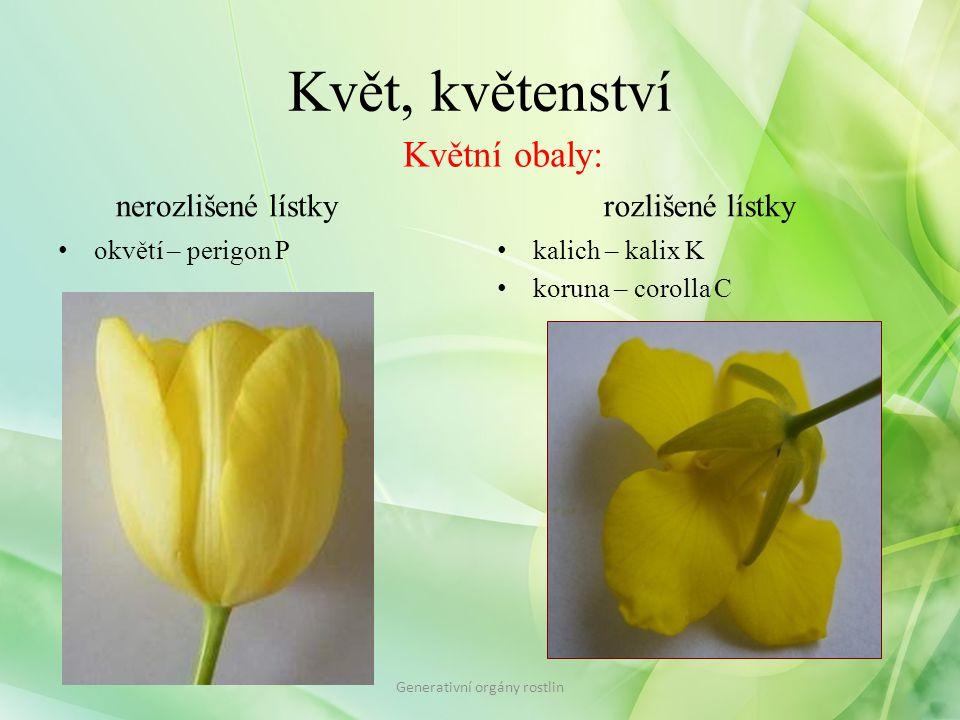 Květ, květenství volnésrostlé Generativní orgány rostlin Květní obaly – lístky: