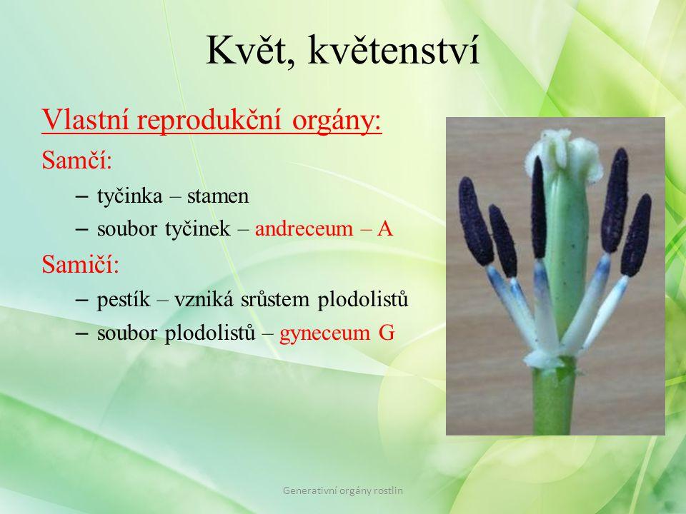 Květ, květenství Vlastní reprodukční orgány: Samčí: – tyčinka – stamen – soubor tyčinek – andreceum – A Samičí: – pestík – vzniká srůstem plodolistů –