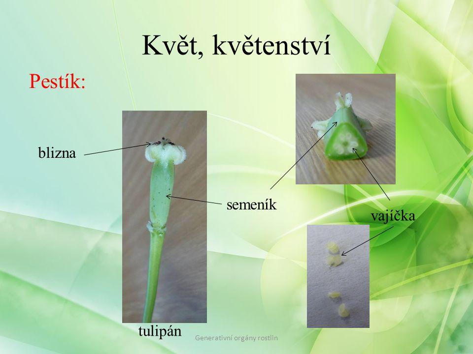 Květ, květenství Pestík: blizna semeník vajíčka tulipán Generativní orgány rostlin