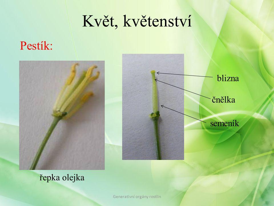 Květ, květenství Schéma květu Generativní orgány rostlin