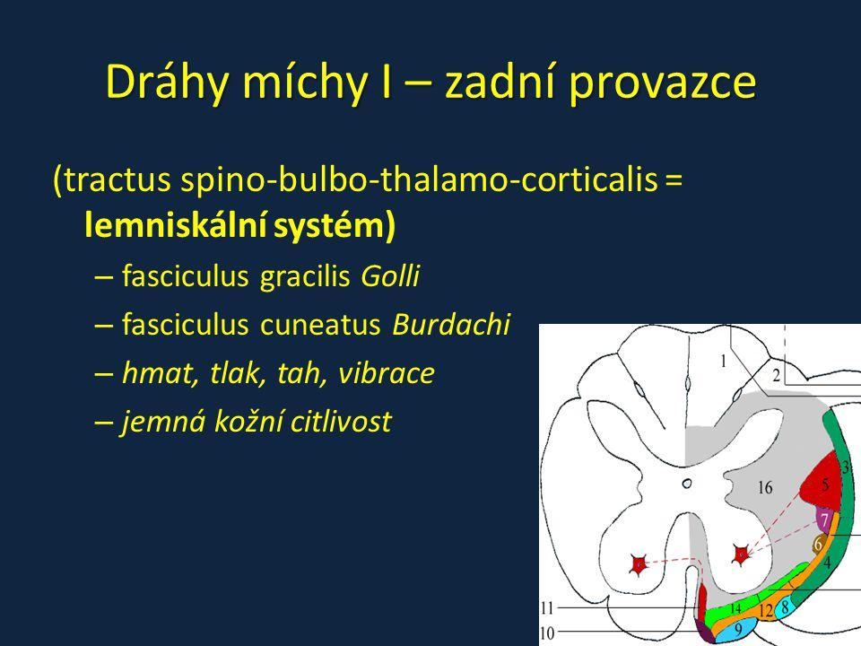 Dráhy míchy I – zadní provazce (tractus spino-bulbo-thalamo-corticalis = lemniskální systém) – fasciculus gracilis Golli – fasciculus cuneatus Burdach