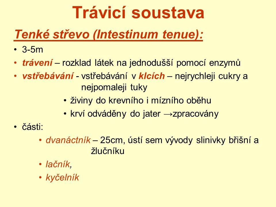 Trávicí soustava Tenké střevo (Intestinum tenue): 3-5m trávení – rozklad látek na jednodušší pomocí enzymů vstřebávání - vstřebávání v klcích – nejryc