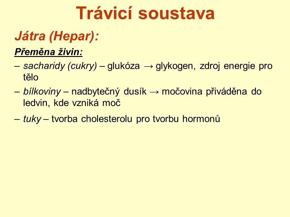 Trávicí soustava Játra (Hepar): Přeměna živin: –sacharidy (cukry) – glukóza → glykogen, zdroj energie pro tělo –bílkoviny – nadbytečný dusík → močovin