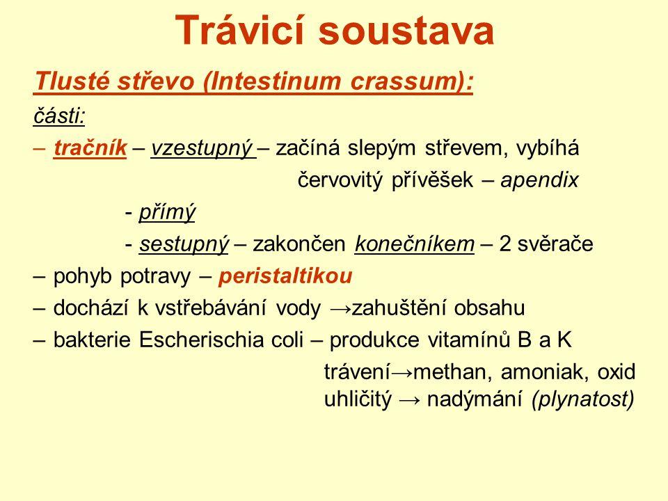 Trávicí soustava Tlusté střevo (Intestinum crassum): části: –tračník – vzestupný – začíná slepým střevem, vybíhá červovitý přívěšek – apendix - přímý