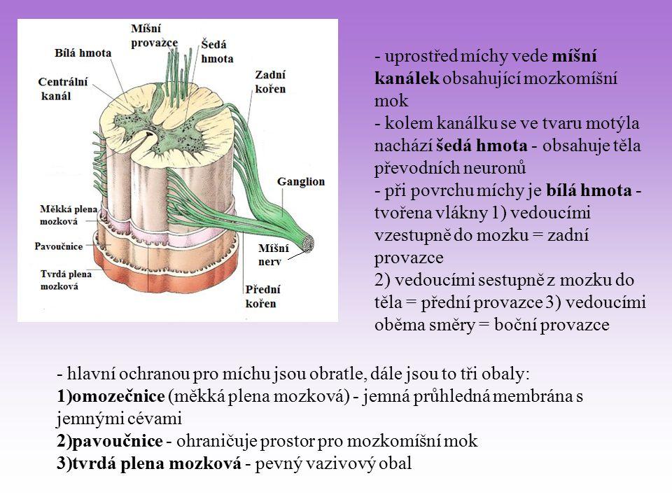- uprostřed míchy vede míšní kanálek obsahující mozkomíšní mok - kolem kanálku se ve tvaru motýla nachází šedá hmota - obsahuje těla převodních neuron