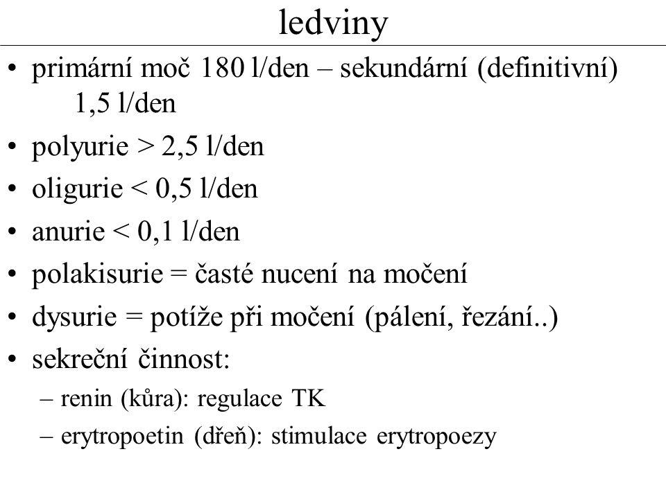 ledviny primární moč 180 l/den – sekundární (definitivní) 1,5 l/den polyurie > 2,5 l/den oligurie < 0,5 l/den anurie < 0,1 l/den polakisurie = časté nucení na močení dysurie = potíže při močení (pálení, řezání..) sekreční činnost: –renin (kůra): regulace TK –erytropoetin (dřeň): stimulace erytropoezy