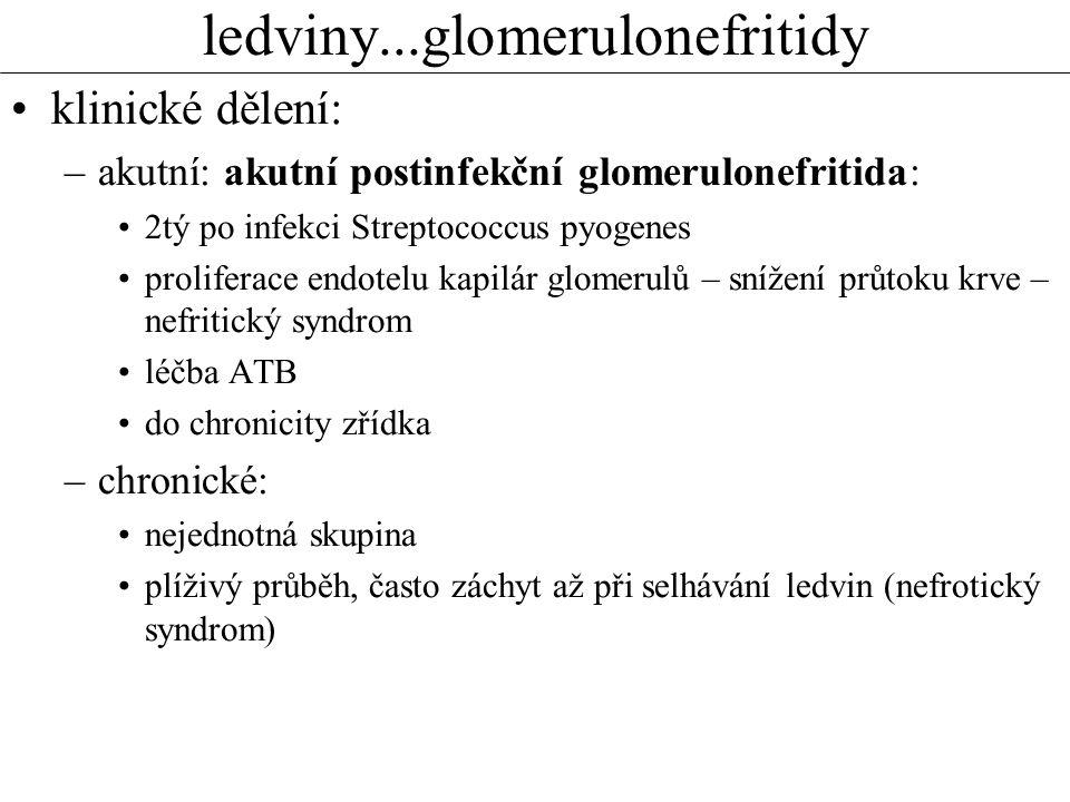ledviny...glomerulonefritidy klinické dělení: –akutní: akutní postinfekční glomerulonefritida: 2tý po infekci Streptococcus pyogenes proliferace endotelu kapilár glomerulů – snížení průtoku krve – nefritický syndrom léčba ATB do chronicity zřídka –chronické: nejednotná skupina plíživý průběh, často záchyt až při selhávání ledvin (nefrotický syndrom)