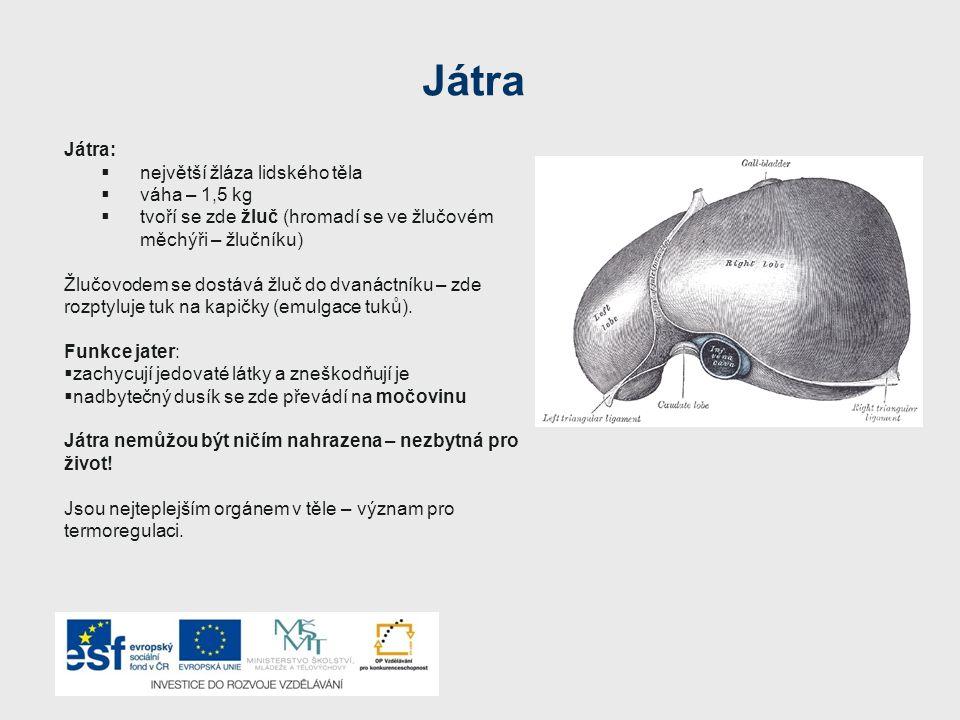 Játra Játra:  největší žláza lidského těla  váha – 1,5 kg  tvoří se zde žluč (hromadí se ve žlučovém měchýři – žlučníku) Žlučovodem se dostává žluč