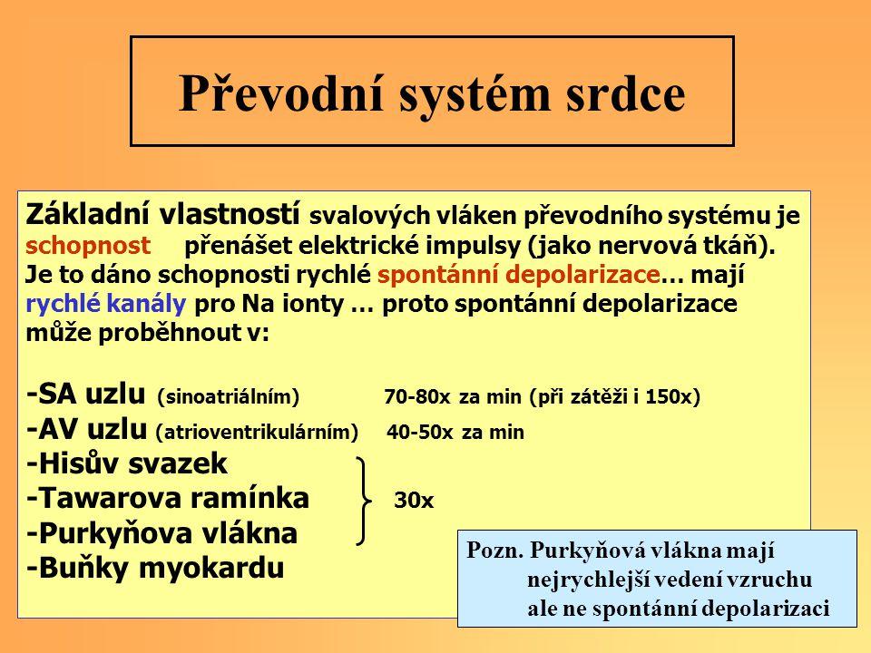 Základní vlastností svalových vláken převodního systému je schopnost přenášet elektrické impulsy (jako nervová tkáň).