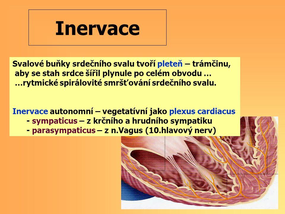 Svalové buňky srdečního svalu tvoří pleteň – trámčinu, aby se stah srdce šířil plynule po celém obvodu … …rytmické spirálovité smršťování srdečního svalu.