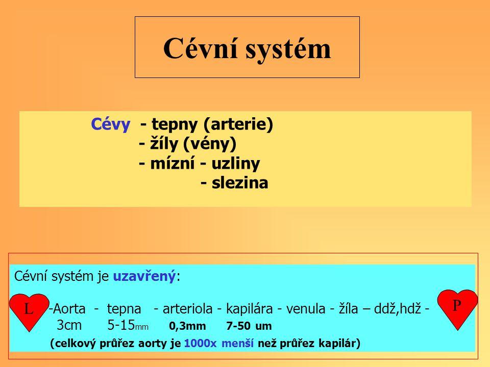 Cévní systém je uzavřený: -Aorta - tepna - arteriola - kapilára - venula - žíla – ddž,hdž - 3cm 5-15 mm 0,3mm 7-50 um (celkový průřez aorty je 1000x menší než průřez kapilár) Cévní systém Cévy - tepny (arterie) - žíly (vény) - mízní - uzliny - slezina L P