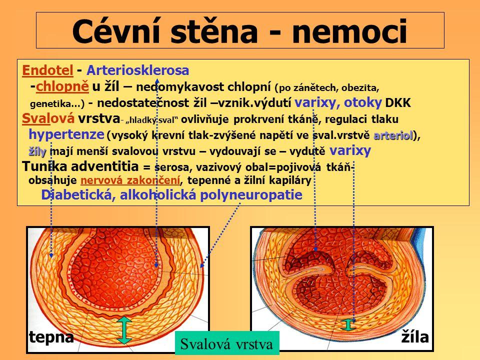 """Cévní stěna - nemoci Endotel - Arteriosklerosa -chlopně u žíl – nedomykavost chlopní (po zánětech, obezita, genetika…) - nedostatečnost žil –vznik.výdutí varixy, otoky DKK Svalová vrstva - """"hladký sval ovlivňuje prokrvení tkáně, regulaci tlaku arteriol hypertenze (vysoký krevní tlak-zvýšené napětí ve sval.vrstvě arteriol), žíly žíly mají menší svalovou vrstvu – vydouvají se – vydutě varixy Tunika adventitia = serosa, vazivový obal=pojivová tkáň- obsahuje nervová zakončení, tepenné a žilní kapiláry Diabetická, alkoholická polyneuropatie tepna žíla Svalová vrstva"""