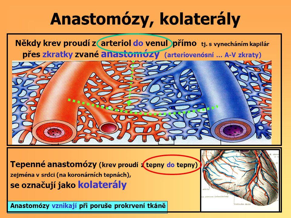 Anastomózy, kolaterály Někdy krev proudí z arteriol do venul přímo tj.