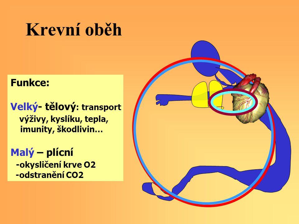 Krevní oběh Funkce: Velký- tělový : transport výživy, kyslíku, tepla, imunity, škodlivin… Malý – plícní -okysličení krve O2 -odstranění CO2