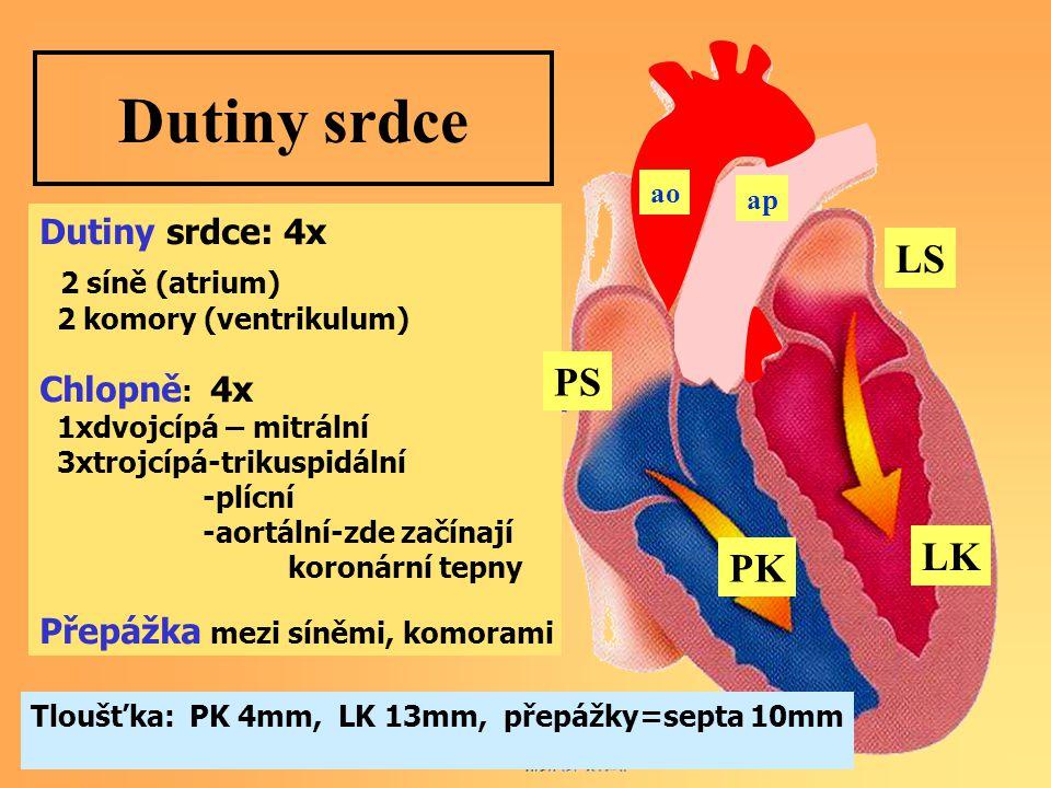 Dutiny srdce Dutiny srdce: 4x 2 síně (atrium) 2 komory (ventrikulum) Chlopně : 4x 1xdvojcípá – mitrální 3xtrojcípá-trikuspidální -plícní -aortální-zde začínají koronární tepny Přepážka mezi síněmi, komorami PS LS PK LK Tloušťka: PK 4mm, LK 13mm, přepážky=septa 10mm ap ao