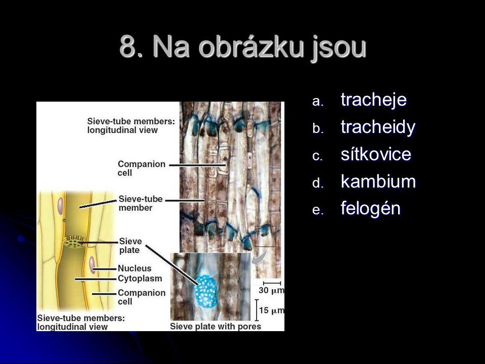8. Na obrázku jsou a. tracheje b. tracheidy c. sítkovice d. kambium e. felogén