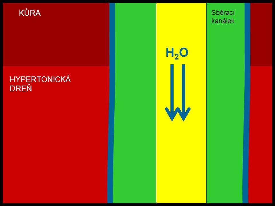 H2OH2O KŮRA HYPERTONICKÁ DREŇ Sběrací kanálek
