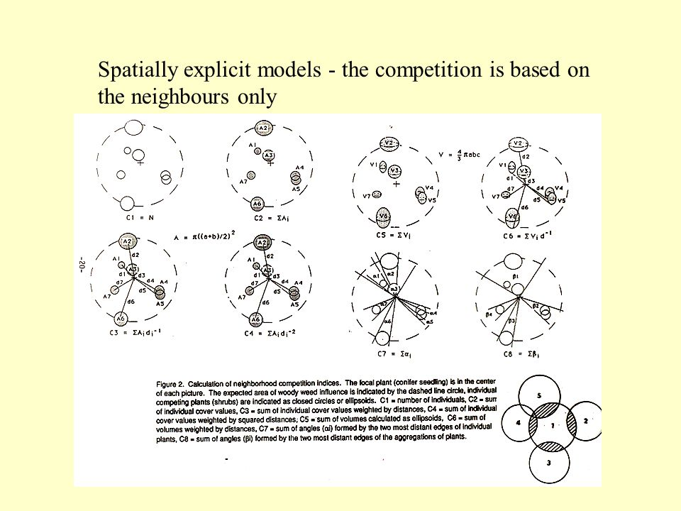 Spatially explicit models - the competition is based on the neighbours only