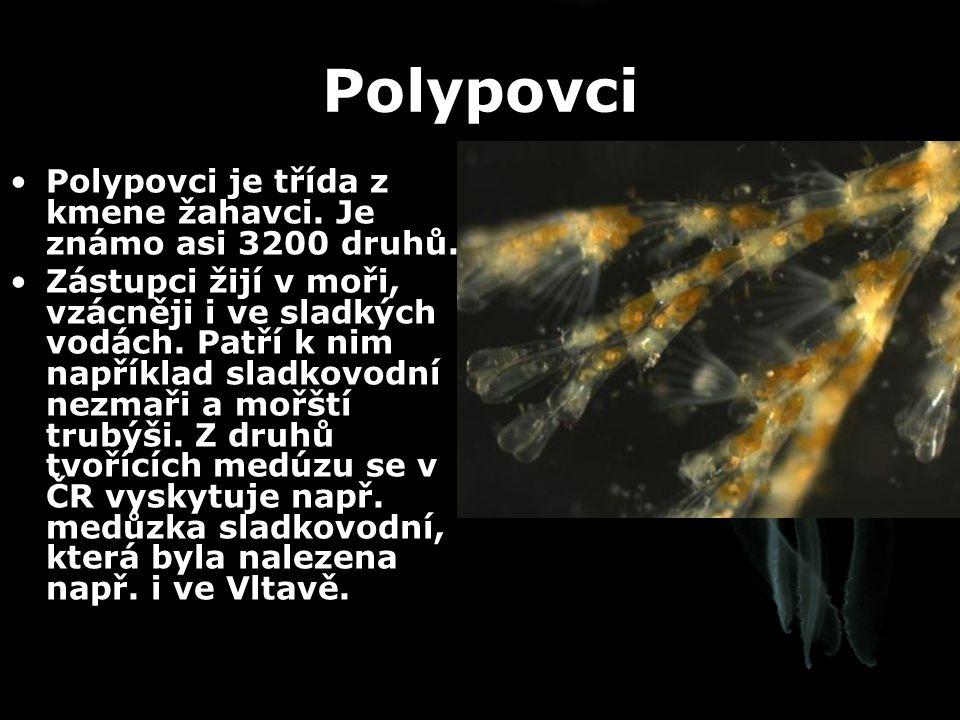 Polypovci Polypovci je třída z kmene žahavci. Je známo asi 3200 druhů. Zástupci žijí v moři, vzácněji i ve sladkých vodách. Patří k nim například slad