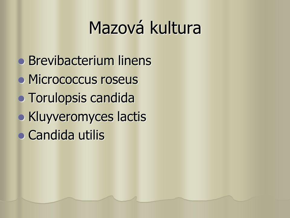 Mazová kultura Brevibacterium linens Brevibacterium linens Micrococcus roseus Micrococcus roseus Torulopsis candida Torulopsis candida Kluyveromyces lactis Kluyveromyces lactis Candida utilis Candida utilis